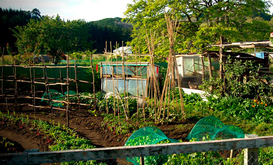 Jardin potager en permaculture for Amenagement potager idees