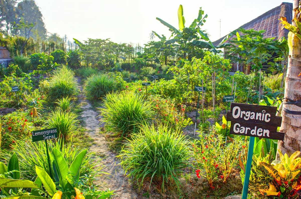 D buter un jardin potager en permaculture - Culture des endives au jardin ...