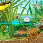 L'aquaponie en permaculture
