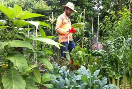 Un permaculteur dans un jardin potager