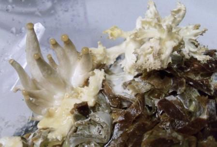 champignons-permaculture