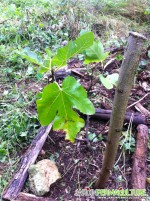 JDB n°4 : bouturage et mise en place d'arbres et arbustes