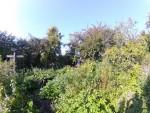 Faire un jardin-forêt ou forêt comestible