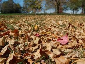 mulch-paillage-feuilles-mortes