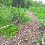 Sol vivant couvert - oakhousepermaculture.blogspot.com