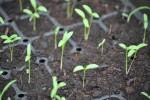 Le jardin potager se prépare dès février!