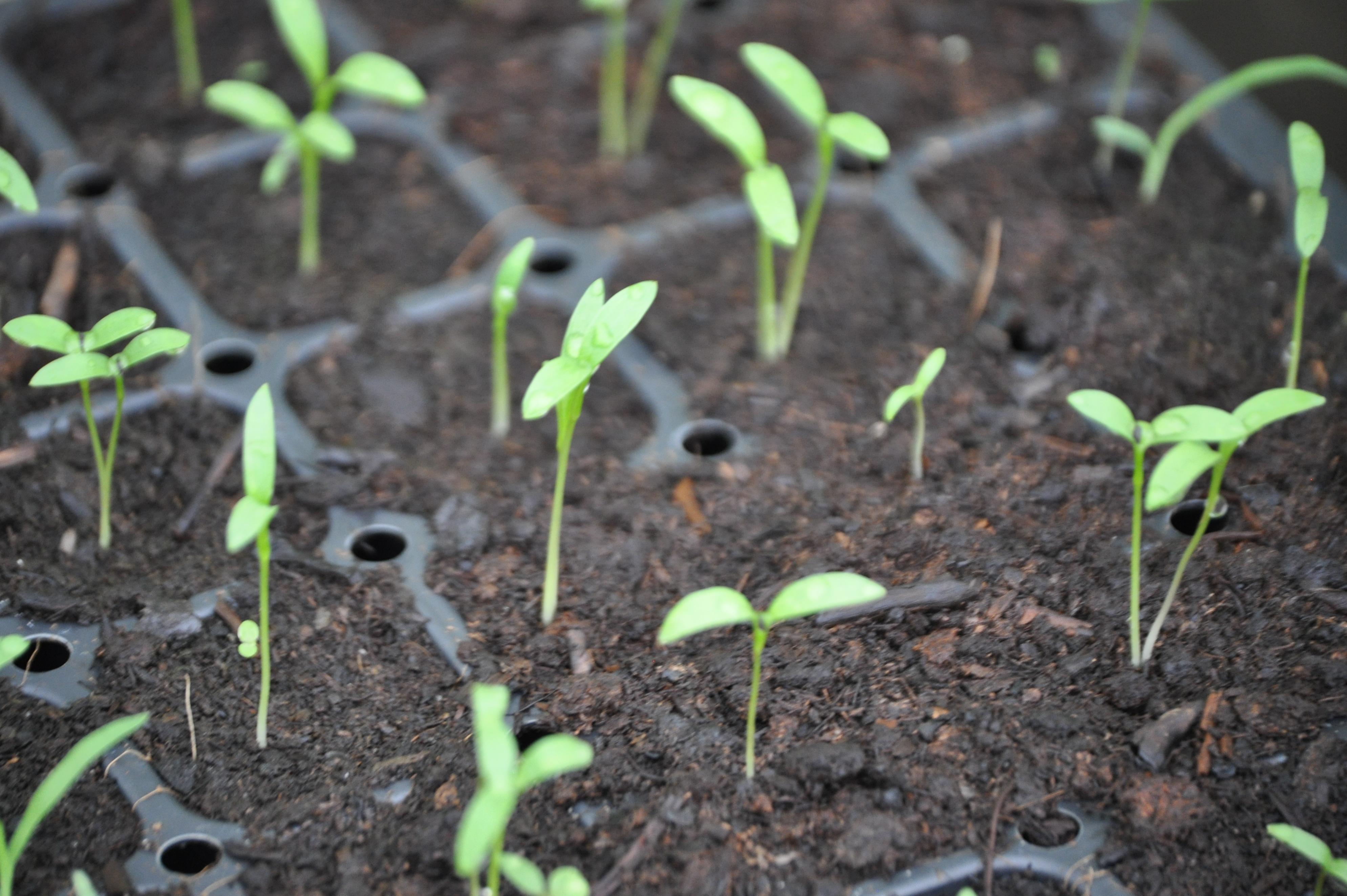 Le jardin potager se pr pare d s f vrier for Le jardin potager